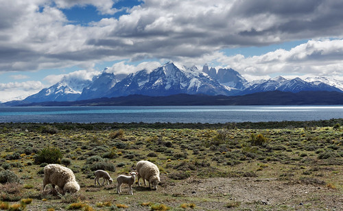 chile park travel patagonia sun lake mountains nature water beautiful grass clouds sheep natural sony pasture torres paine