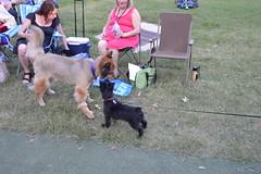 106 Puppy Love