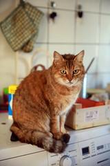 Pelouss, la chatte rousse