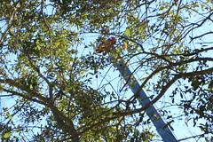 Henry's Tree