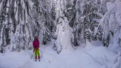 Las przykryty śniegem - Ewelina