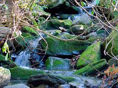 Mossy Fall