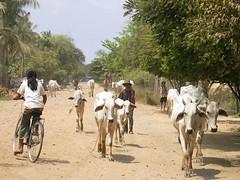 Cambodia - Bassac River Road