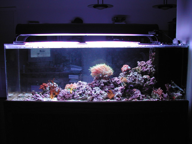 100 Gallon Reef Aquarium Taking a picture of my whole tank ...