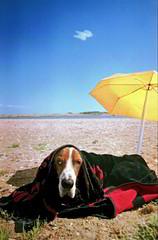 taltos the prerie dog