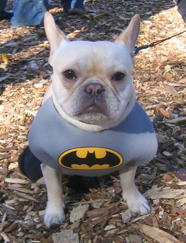 bat-hound