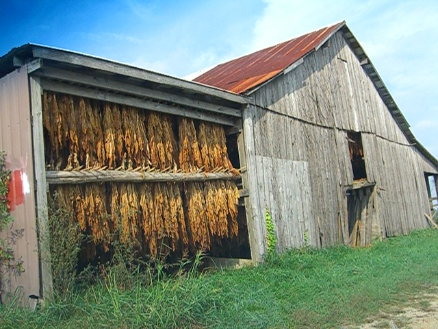 Tobacco barns on pinterest barns north carolina and georgia for Tobacco barn house plans