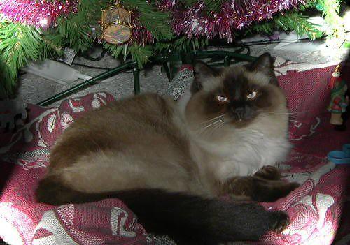 Christmas Gracie