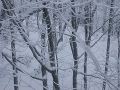 branch(1.0), winter(1.0), tree(1.0), snow(1.0), rain and snow mixed(1.0), ice(1.0), frost(1.0), forest(1.0), winter storm(1.0), blizzard(1.0), freezing(1.0),