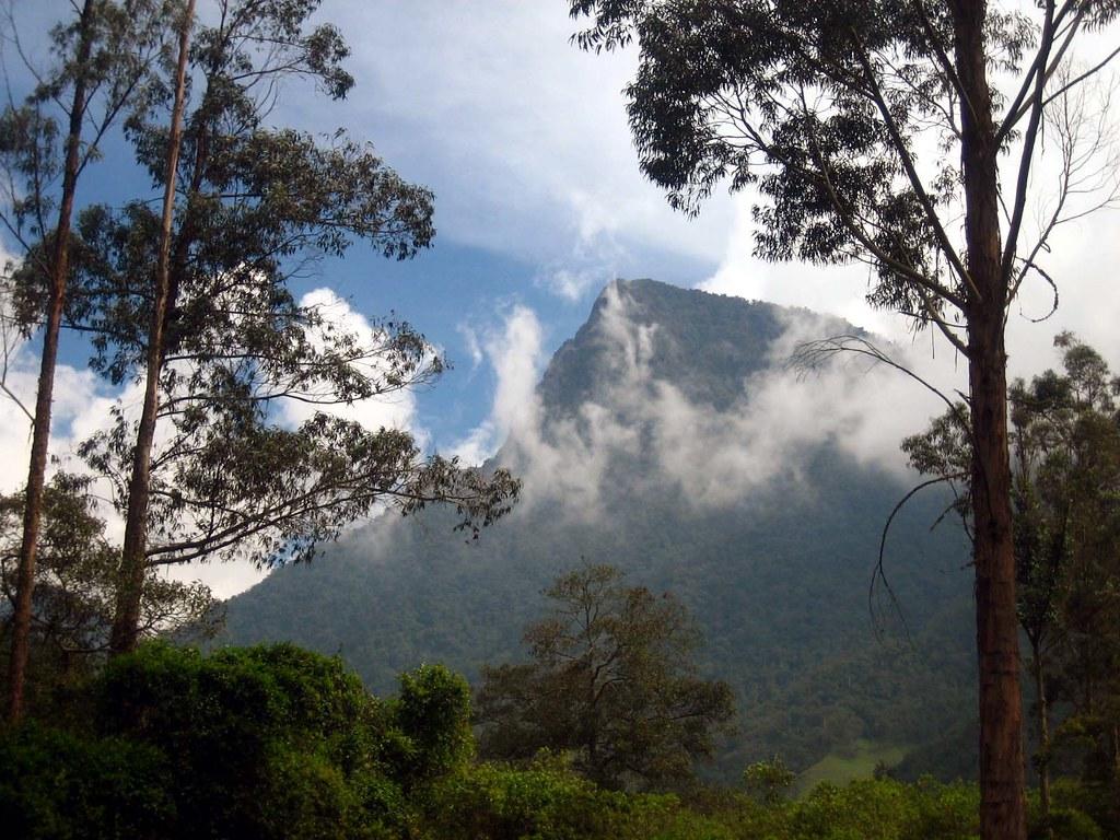 Imagen de Morro Gacho en el Valle de Cocora