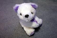 bichon frisã©(0.0), pet(0.0), bear(0.0), teddy bear(1.0), animal(1.0), textile(1.0), dog(1.0), mammal(1.0), plush(1.0), stuffed toy(1.0), toy(1.0),