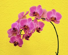 A bunch of orchids