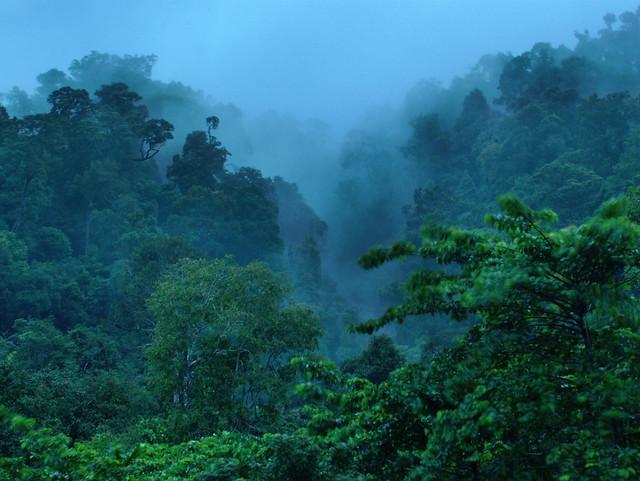 Misty Morning, Langkawi style