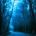 A_CRW_5669_Fog_Blue by Defining Imagery