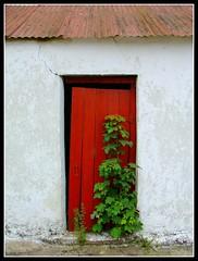 old milking parlour door
