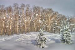 Niseko Winter wonderland