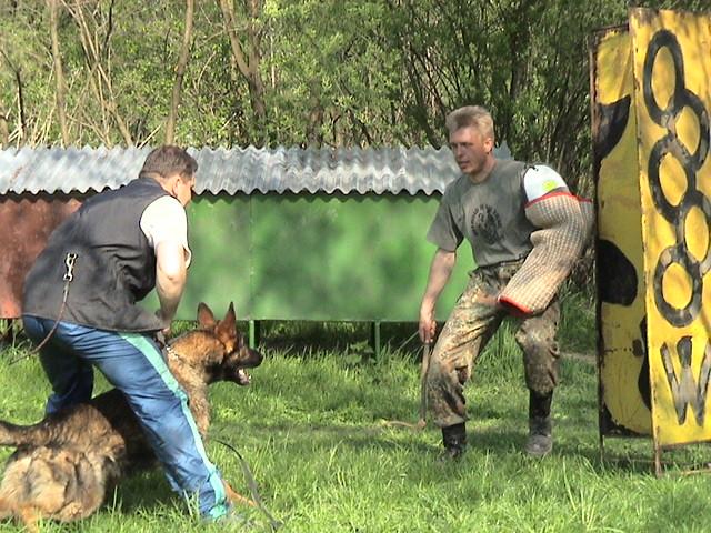 Alpha Dog Training Knoxfield