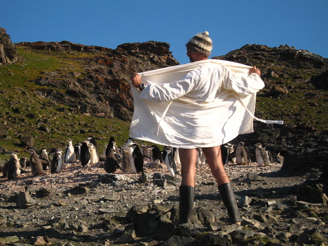 'March of the Penguins 2'