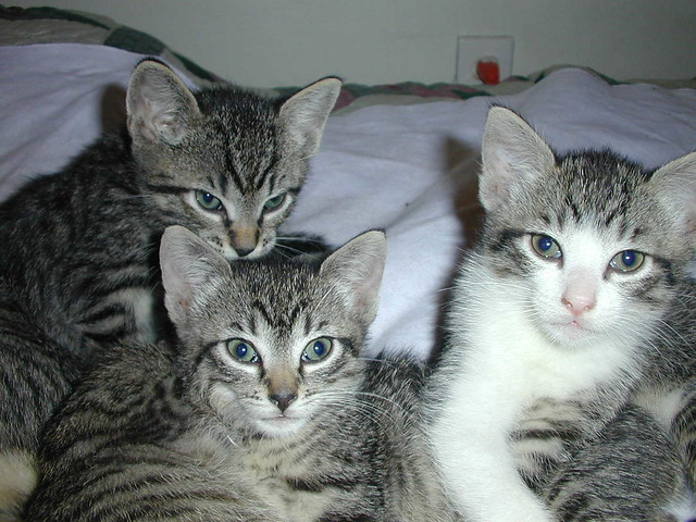 KittensFaces