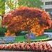 Burning Bush Tree by pmarella