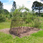 Overgrown in Ashton Park, Preston