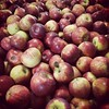 Pressing apples today! 90 bins = 20,000L