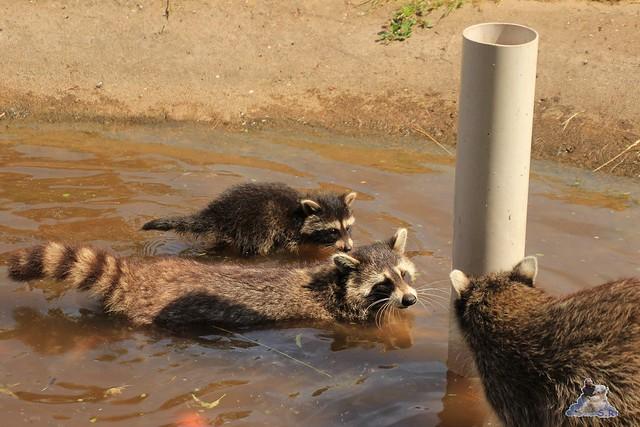 Tierpark Krüzen 03.07.2015  37