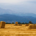 Colorado Agriculture Farming Panorama View by Striking Photography by Bo Insogna