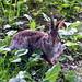 rabbit by keenjonny