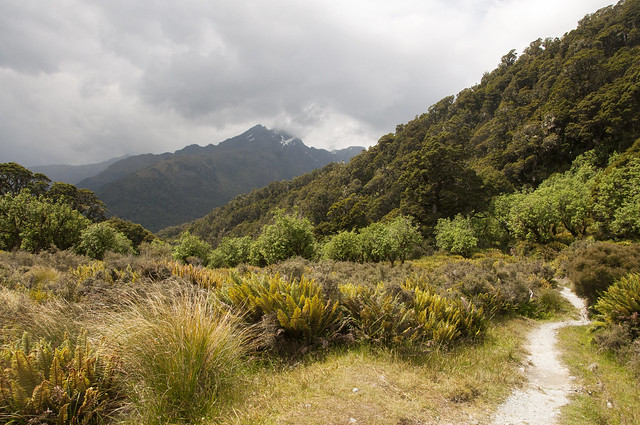 Routeburn Track Orchard