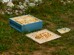 Vergeten de honingkamer met natte ramen weg te zetten. Nu stikt het er van de bijen. (Niet goed te zien op de foto)