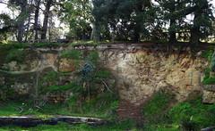 Disused mudstone quarry