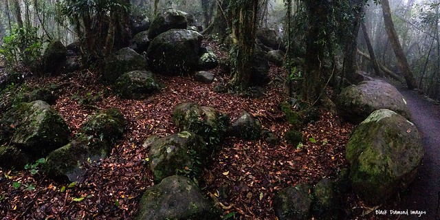 Rainforest Scene at Best of All Lookout - Springbrook National Park
