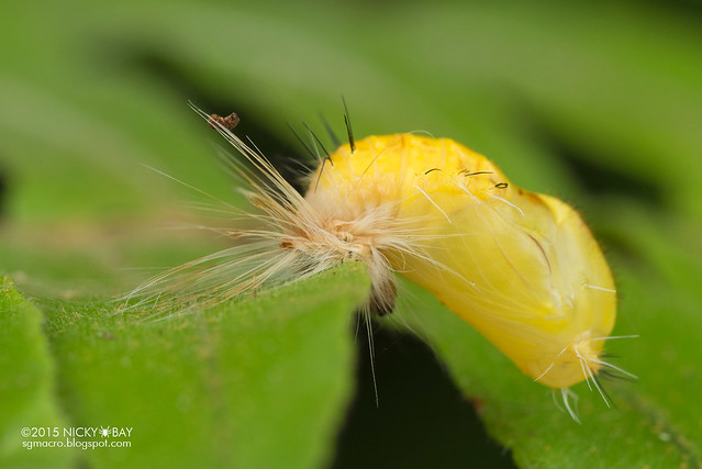 Unknown pupa - DSC_3894