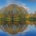 Reflections # 2 by Reg Ramai