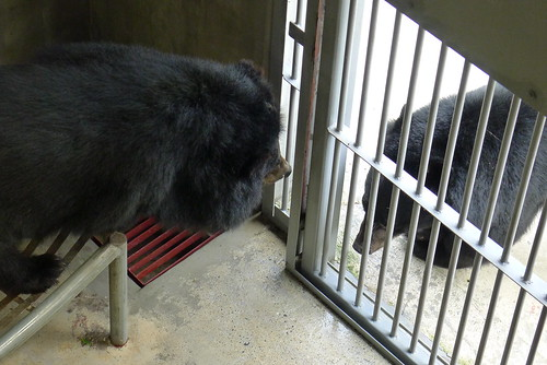 Yogi saying hello to the other bear
