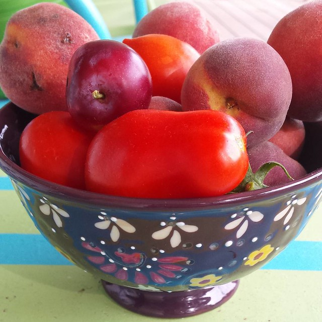 A small harvest finally- plum tomatoes,  peaches,  and one cherry sized plum. A bounty of reds #garden #harvest #tomatoes