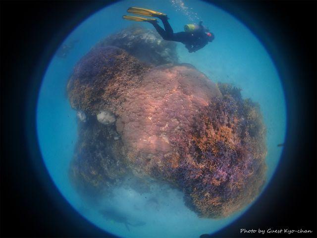 浜島東のメインの根。サンゴは無事でした♪