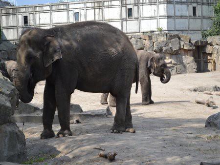 Tierpark 2 5 Recomandari turistice in Berlin