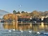 Η λίμνη των κύκνων - Ιωάννινα, Ήπειρος - Swan lake - Ioannina, Greece