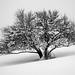 Le cri de l'Arbre dans le Ventre blanc du Silence by PaxaMik