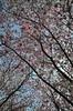 Gärten der Welt: Kischblüten