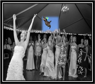 Bride throwing cat