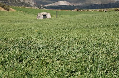 Verde Siembra