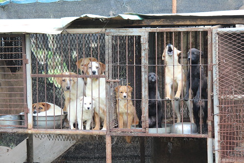 Dog Farm 3, Busan, Korea 2014