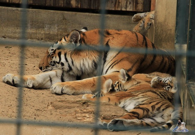 Tierpark Berlin 18.07.2015 0164