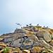 gulls by Sunnyvaledave