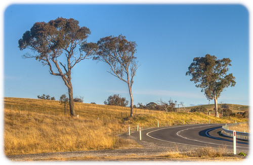 Three Gumtrees on a Bend