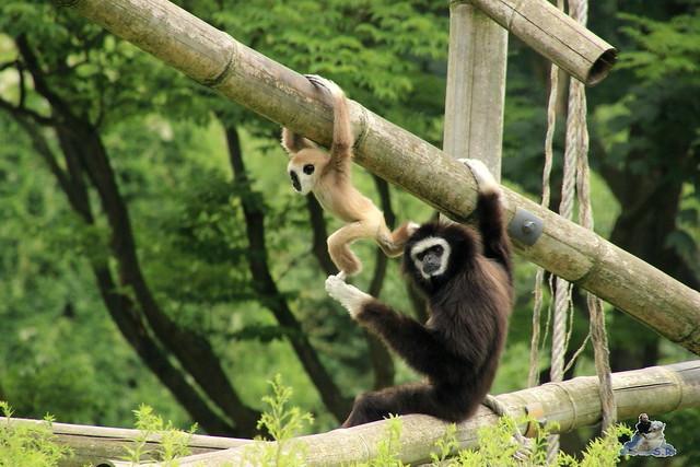 Tierpark Berlin 18.07.2015 0130