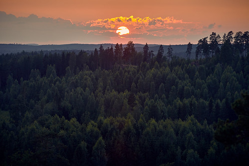 trees light sunset summer sky cloud sun sunlight tree green nature weather forest finland landscape dawn evening woods scenery view natural outdoor hill scenic peaceful aerialview scene aerial environment sunbeam